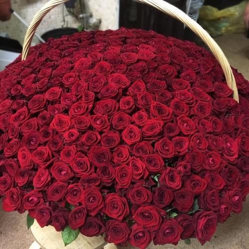 Купить на заказ 1001 роза с доставкой в Шалкаре
