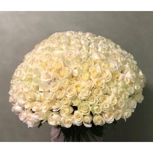 Купить на заказ 201 роза с доставкой в Шалкаре